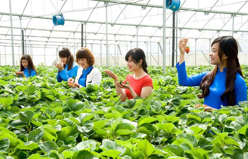 Mô hình trải nghiệm nông nghiệp thông minh trong trường học