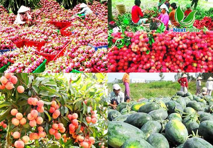 Xu hướng phát triển nông nghiệp Thế kỷ XXI