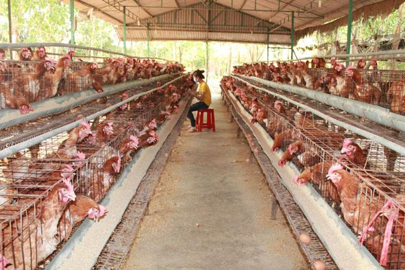 giải pháp quản lý chăn nuôi