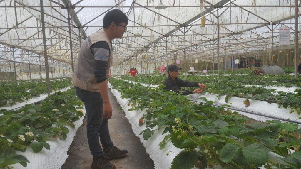 [Lào Cai] Nextfarm triển khai 2 hệ thống châm phân dinh dưỡng tự động cho HTX Rau Sạch Thắng Lợi tại Sapa Lào Cai
