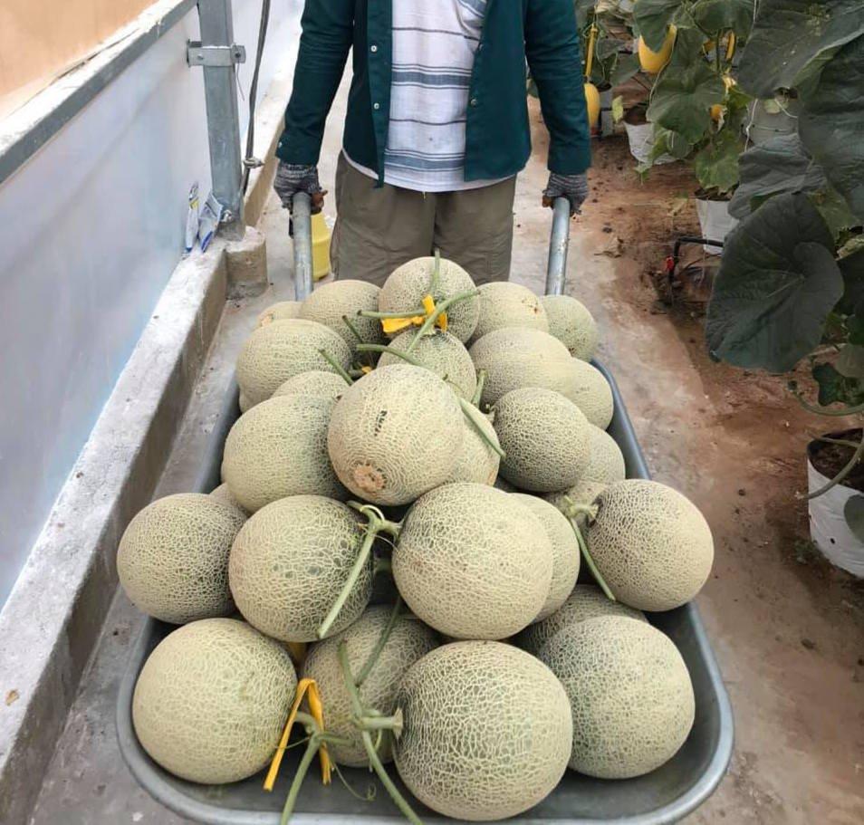 Nextfarm triển khai hệ thống châm phân dinh dưỡng tự động Nextfarm Fertikit 4G ByPass đặc biệt 10 cổng cho UDEC ECO FARM Vũng Tàu – Đơn vị hợp tác với KIM LONG FARM