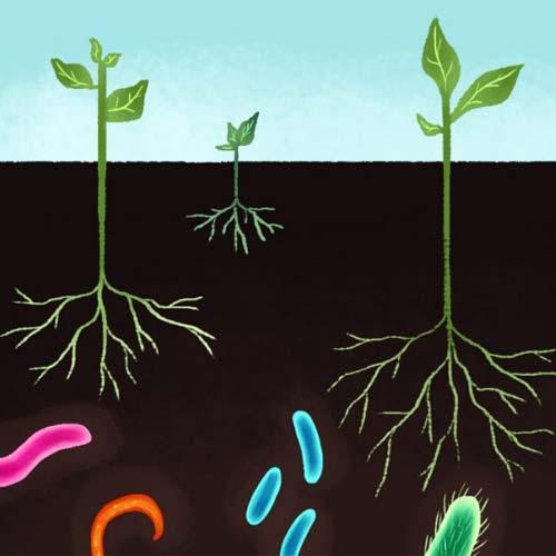 Vai trò & yêu cầu của hệ VSV đất trong nông nghiệp hữu cơ