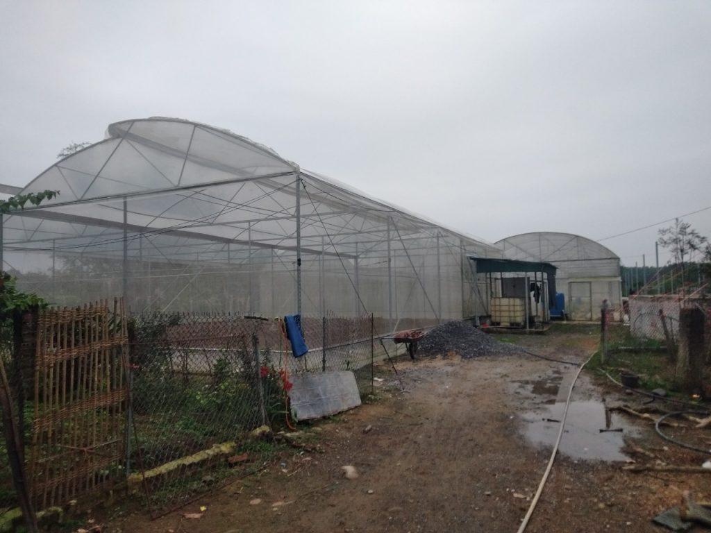 [Quảng Ninh] Nextfarm triển khai hệ thống châm phân dinh dưỡng tự động Nextfarm Fertikit 4G cho anh Trương Thế Đô tại Đầm Hà – QN
