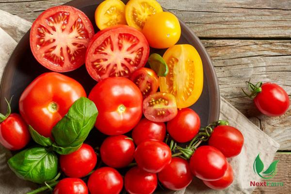 Cách trồng và chăm sóc cà chua hiệu quả