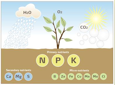 sự ảnh hưởng của các nguyên tố hóa học đến sự phát triển của cây trồng