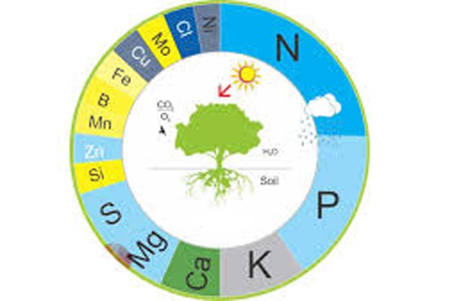 Tác động của các nguyên tố hóa học đến sự phát triển của cây trồng