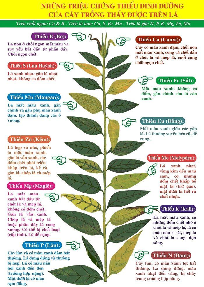 Các nguyên tố dinh dưỡng quan trọng trên cây trồng