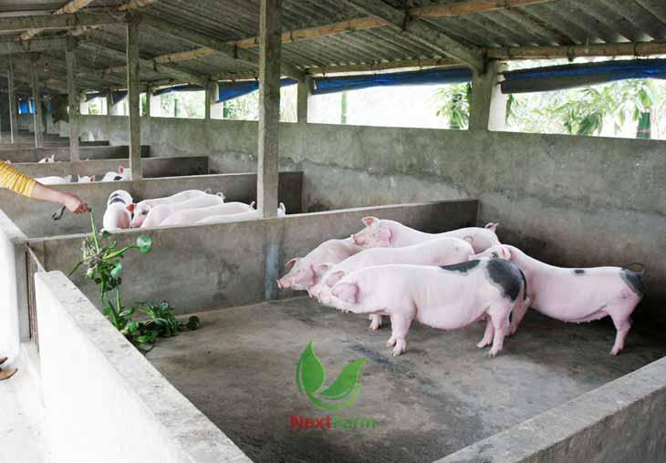 giải pháp quản lý trang trại