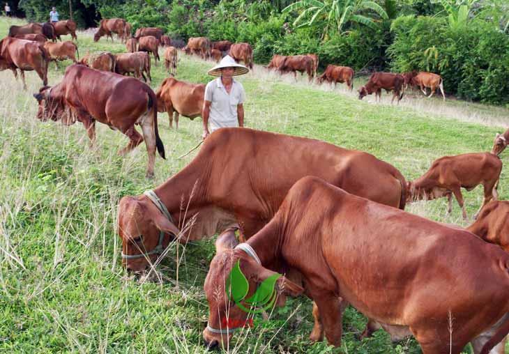 Giải pháp quản lý trang trại thông minh Next Farm