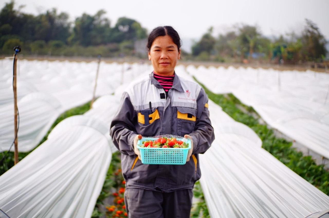 Nextfarm chính thức triển khai Giải pháp Nông nghiệp thông minh Nextfarm trại Dâu Tây và Hoa – Hasfarm Cao Bằng (Trường Anh Farm)