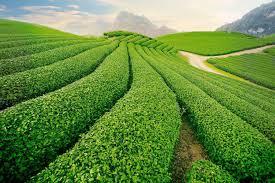 Nông nghiệp hữu cơ là gì? - Hội làm vườn Việt Nam