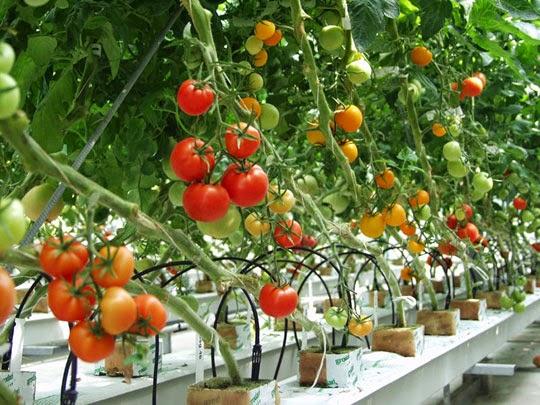 Hệ thống nông nghiệp thông minh Nextarm