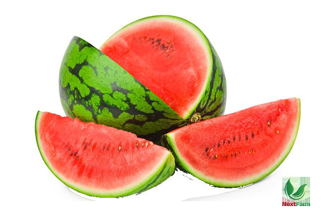kỹ thuật trồng dưa hấu