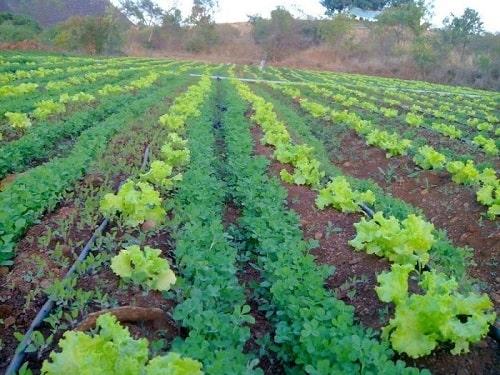 Nông nghiệp hữu cơ
