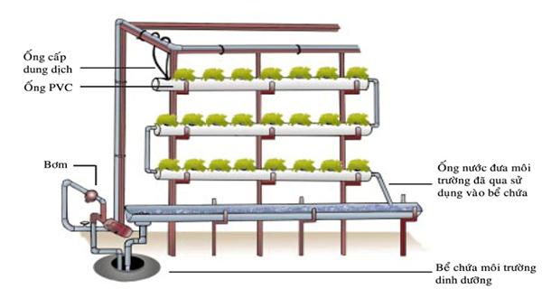 Kết quả hình ảnh cho kỹ thuật trồng rau thủy canh hồi lưu
