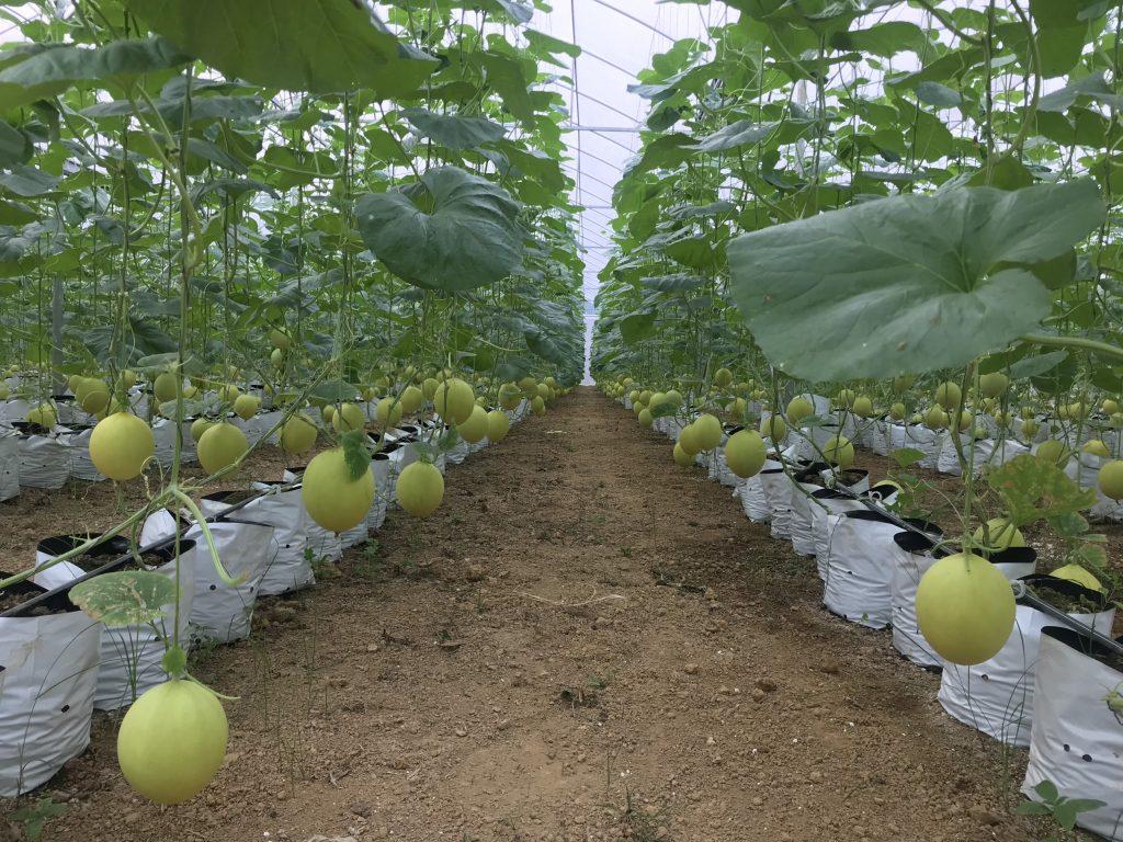 Công ty CP Ứng dụng Nông nghiệp Công nghệ cao Điền Trạch