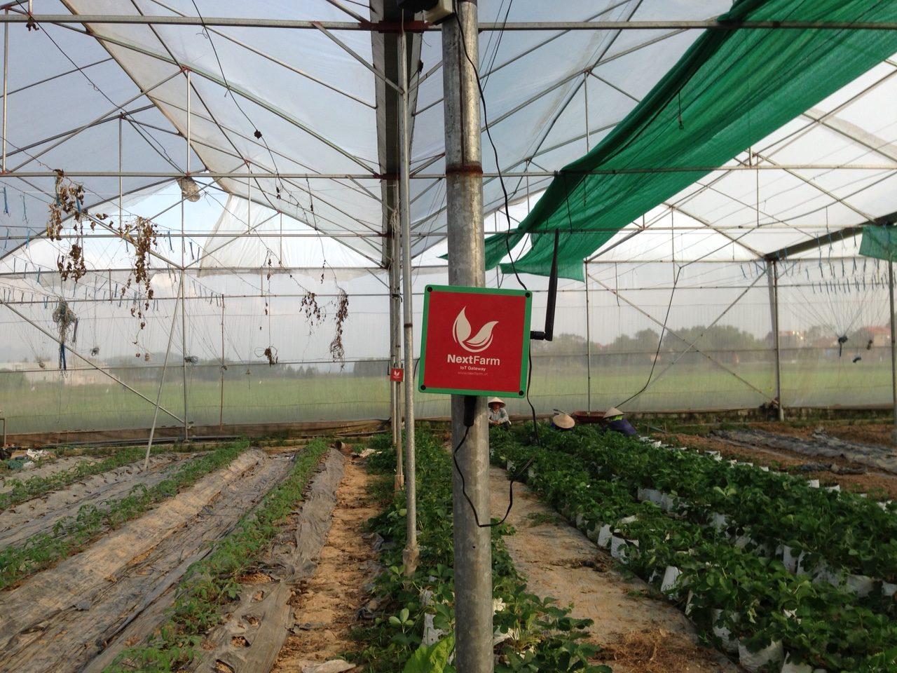 châm phân dinh dưỡng cây trồng