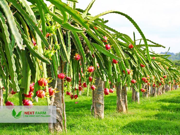 áp dụng nông nghiệp thông minh
