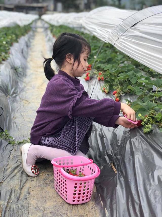 Người con của Cao Bằng đưa dâu tây Cao Bằng lên một tầm mới bằng gia đình, kiên trì và nông nghiệp thông minh - Ảnh 3.