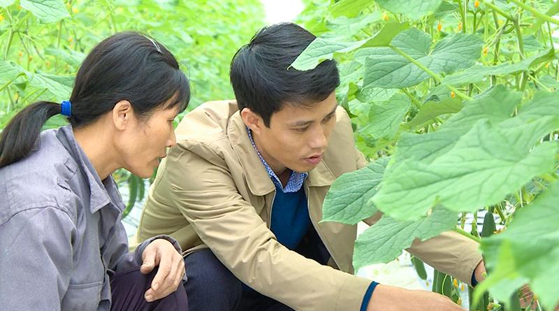 Nextfarm triển khai Giải pháp Nông nghiệp thông minh cho Rau sạch Quảng Tân Đầm Hà Quảng Ninh