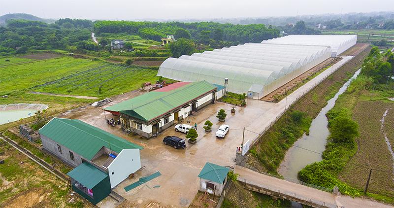 [Quảng Ninh] Nextfarm làm Tổng thầu tư vấn thiết kế thi công và triển khai Giải pháp Nông nghiệp thông minh Nextfarm cho Rau sạch Quảng Tân Đầm Hà Quảng Ninh