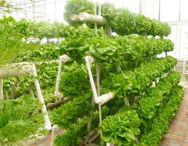 Lựa chọn cách trồng rau cho riêng bạn