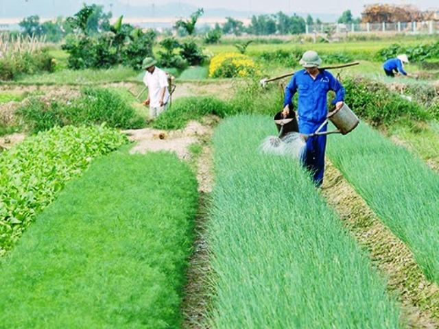 """Tư vấn """"Thực hiện 5 đúng trong canh tác nông nghiệp"""" tại huyện Nam Trực, tỉnh Nam Định"""