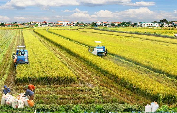 Hệ thống Nông nghiệp thông minh ở Việt Nam cơ hội và thách thức